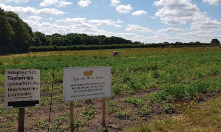Fruit picking – Kenyon Hall Farm